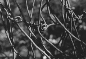 wirefoto